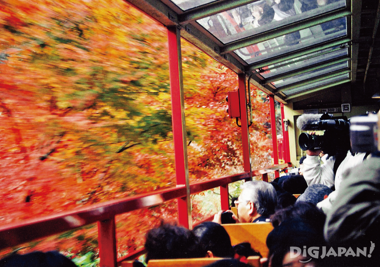 sagano romantic train in the autumn