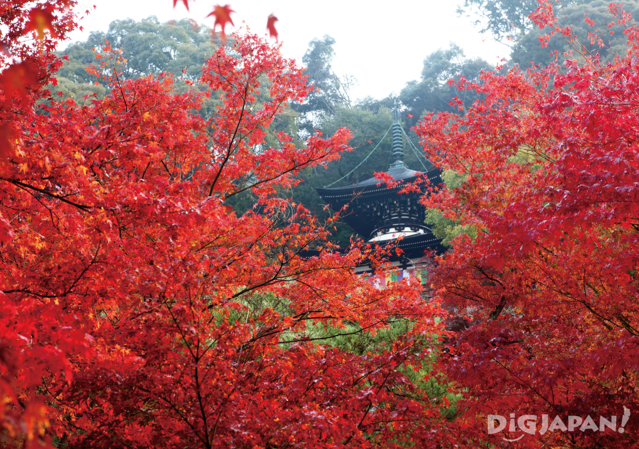 Eikando Temple in the fall with brilliant red leaves