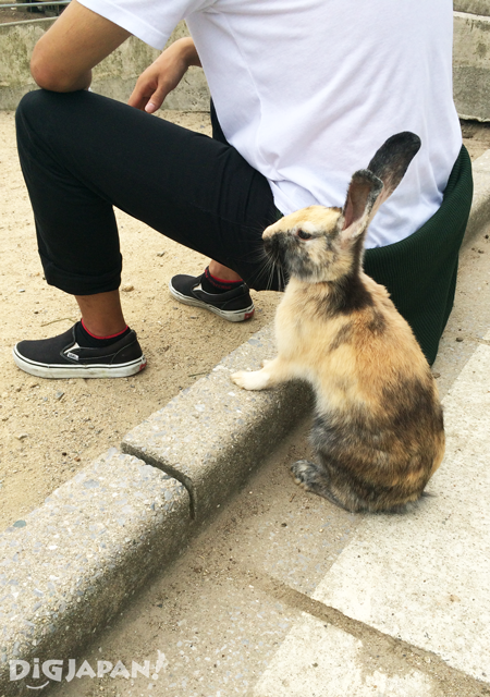 大久野島-野生兔-一起看風景