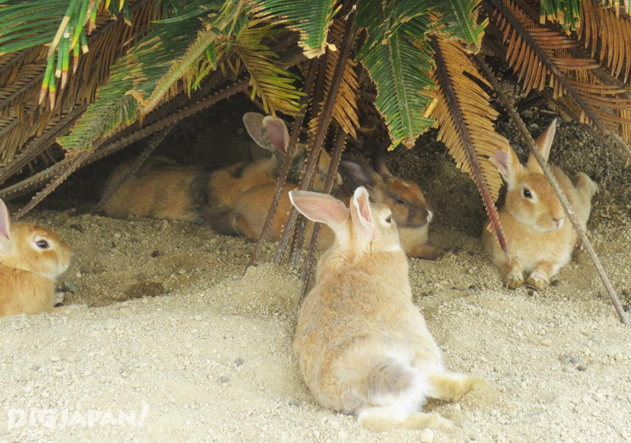 大久野島-野生兔和沙灘