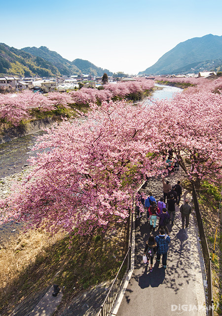 River view with sakura