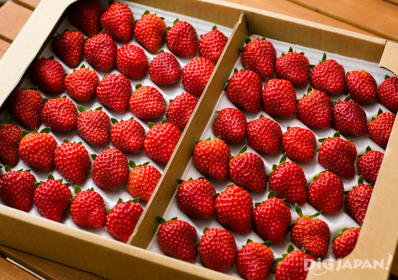 MIGAKI-ICHIGO Strawberries