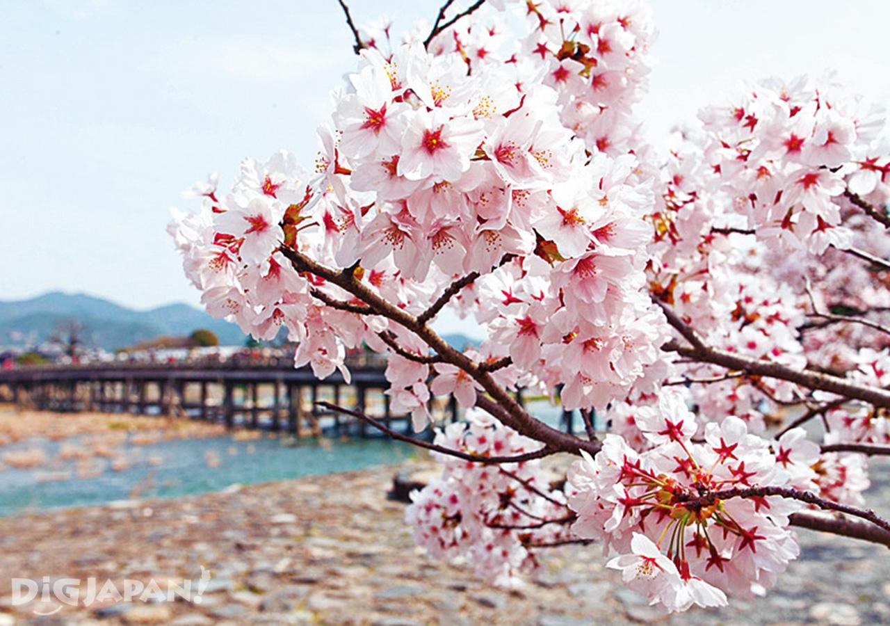 渡月橋、嵐山