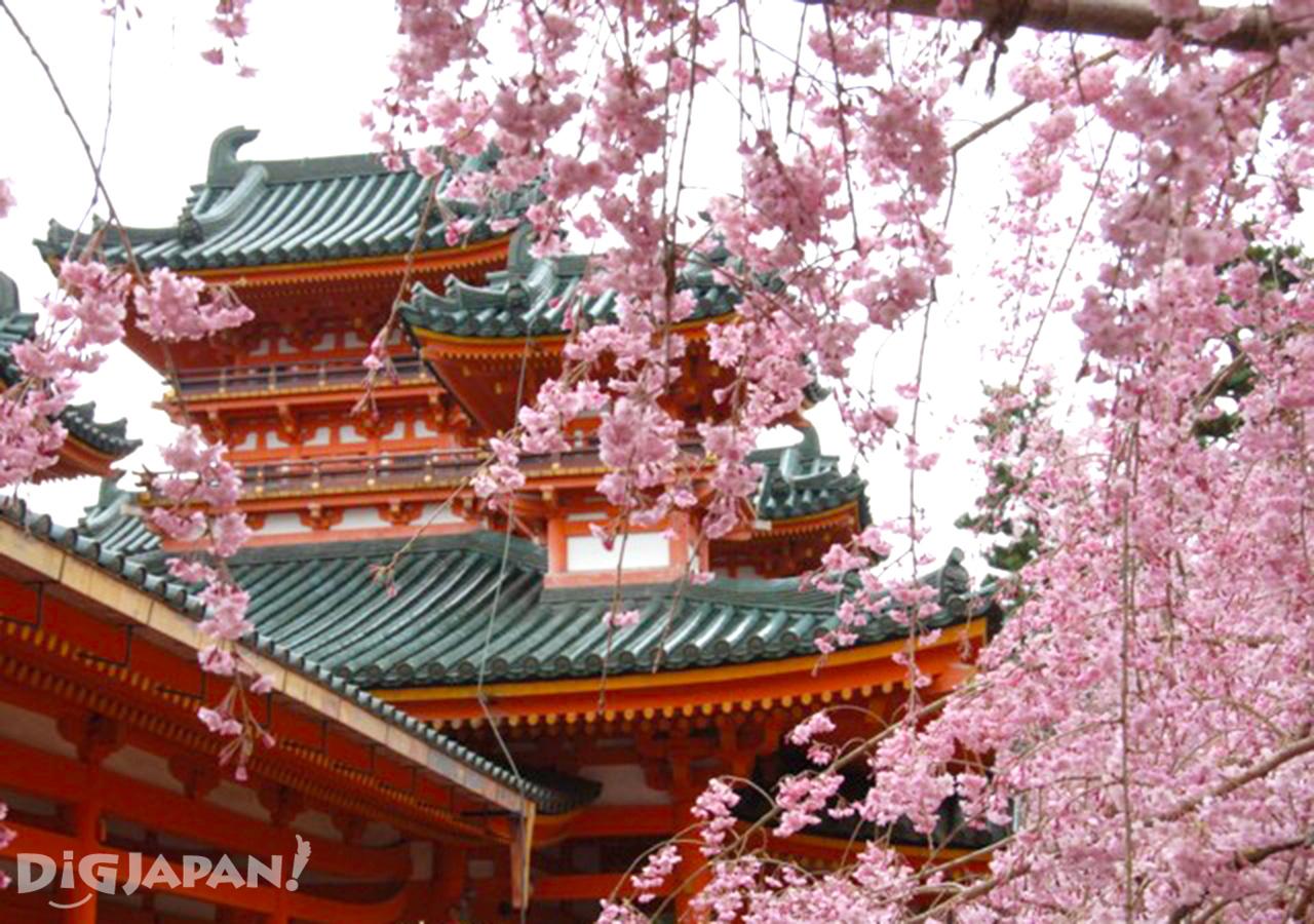 Sakura at Heian Jingu Shrine