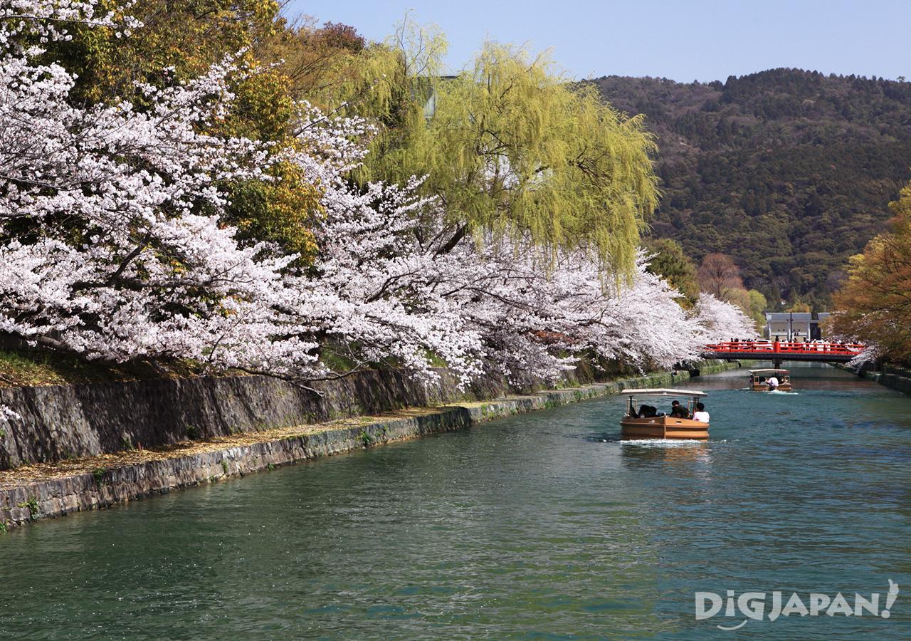 Okazaki Canal Sakura