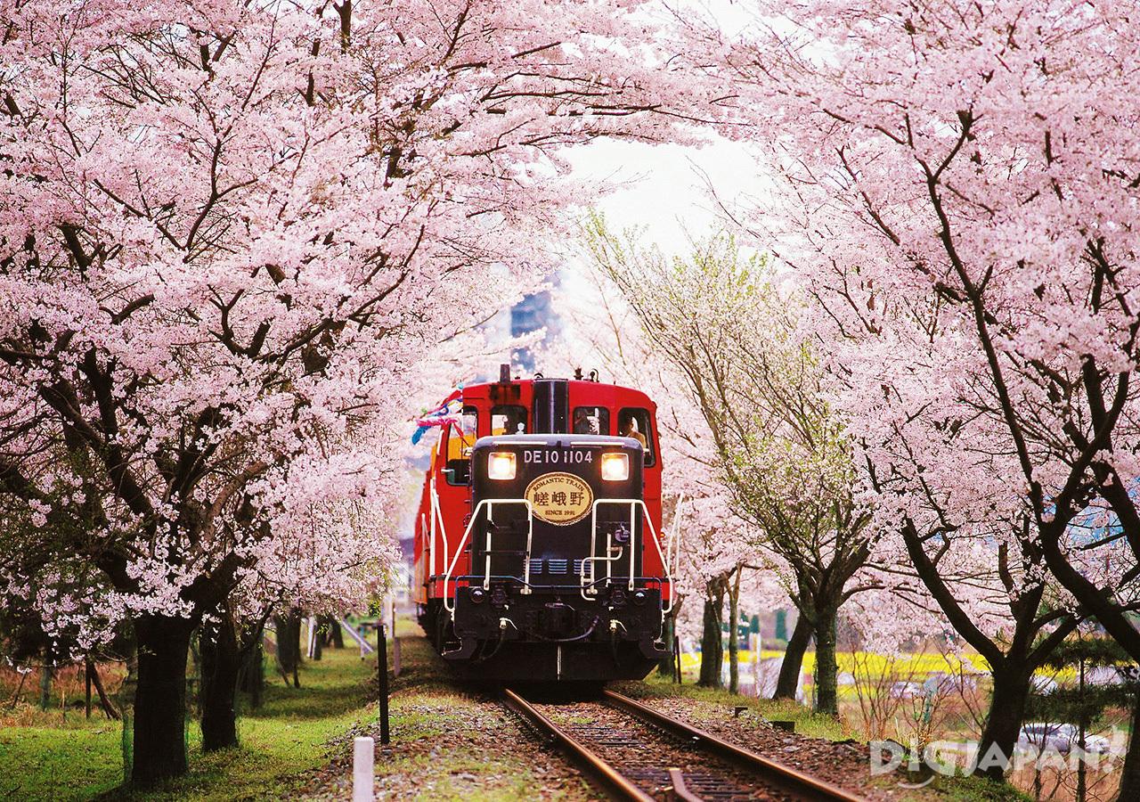 Sakura and the Sagano Romantic Train