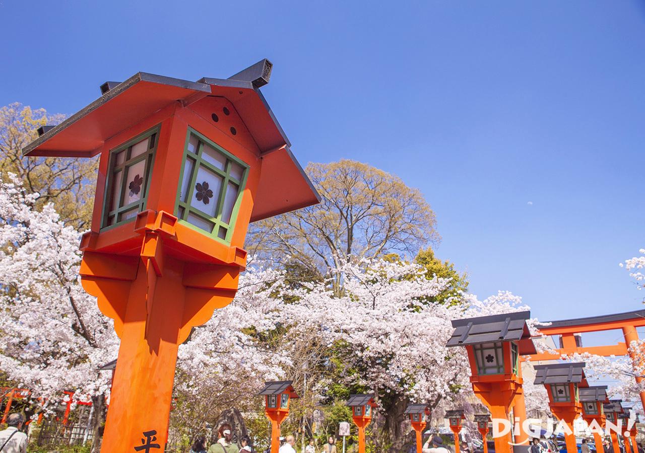 Sakura and lanterns at Hirano-jinja Shrine