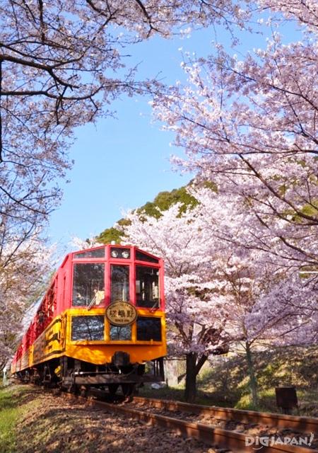 Sakura at the Sagano Romantic Train