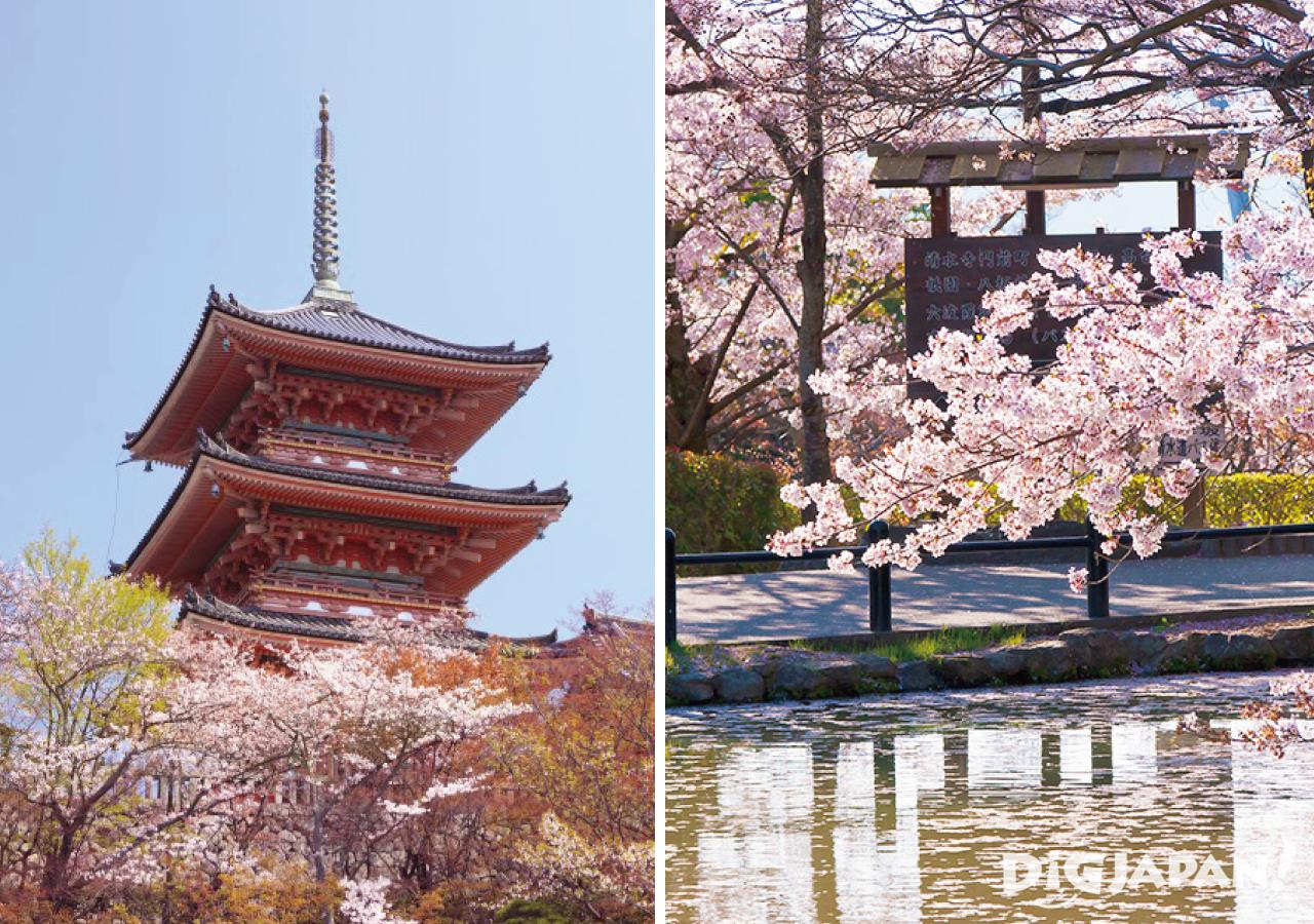 Sakura at Kiyomizu-dera