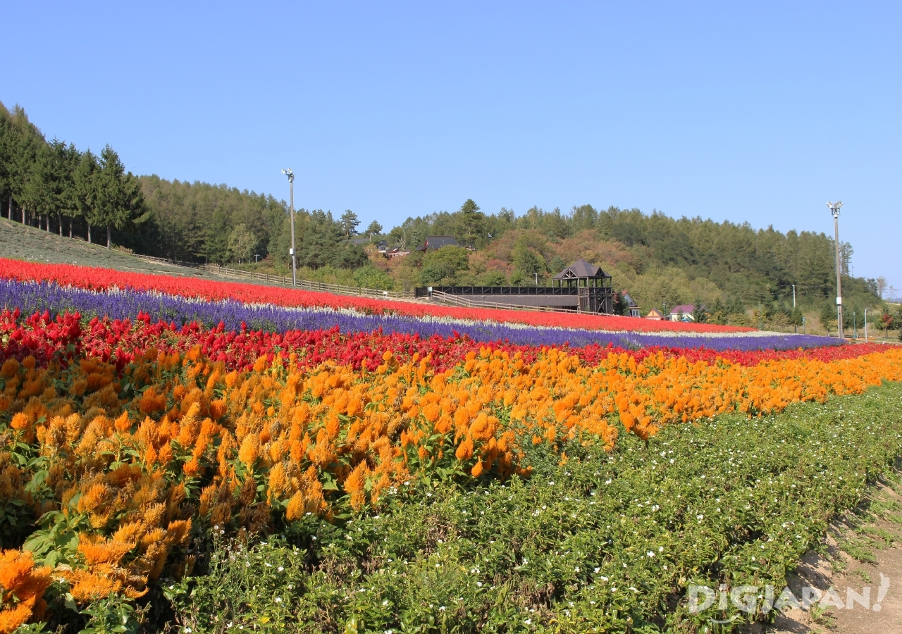 홋카이도의 후라노의 여름 꽃밭 1