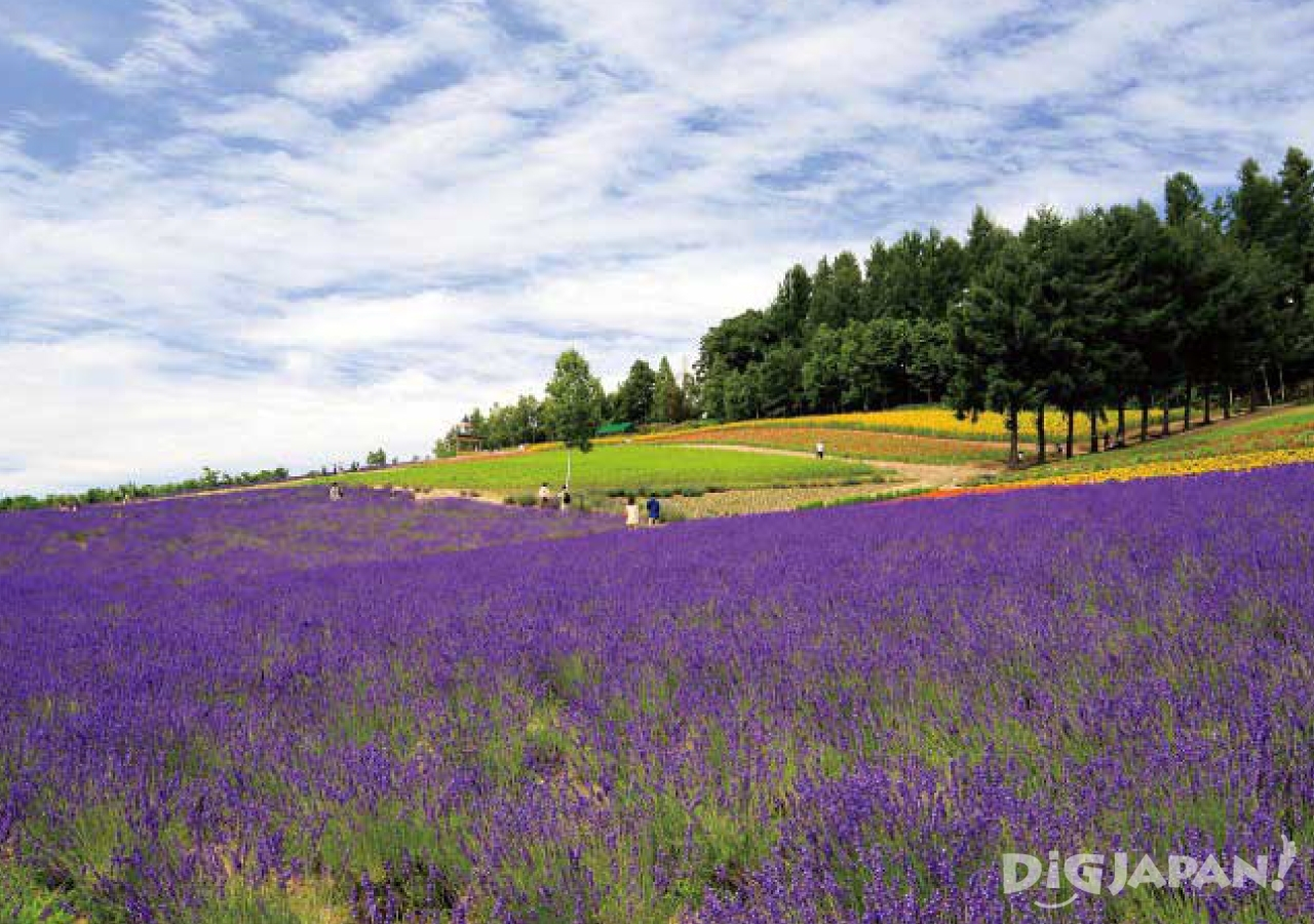 홋카이도의 후라노의 여름 꽃밭2
