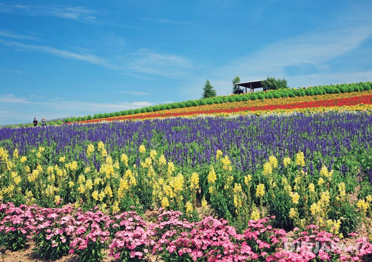 홋카이도의 후라노의 여름 꽃밭3