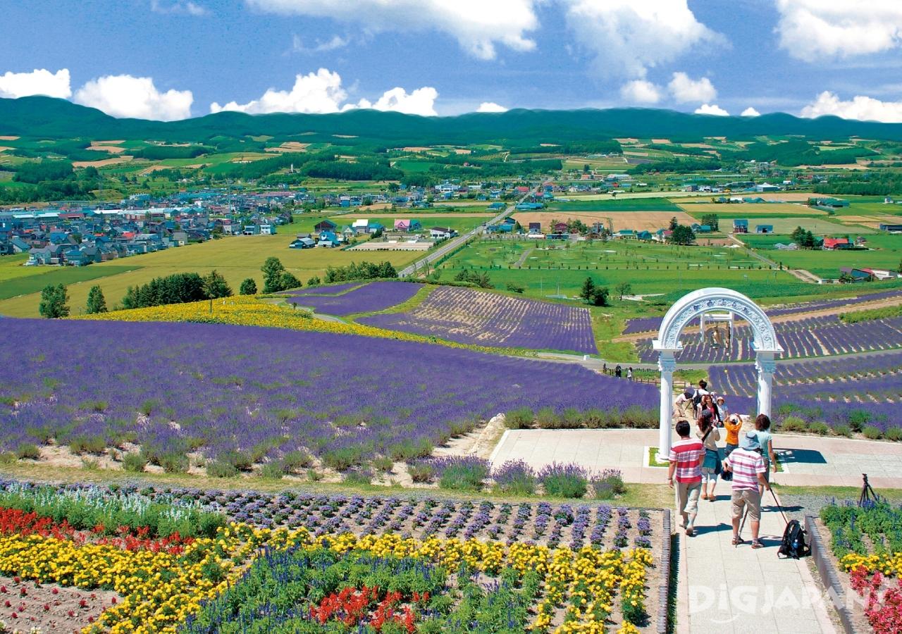 홋카이도의 후라노의 여름 꽃밭8