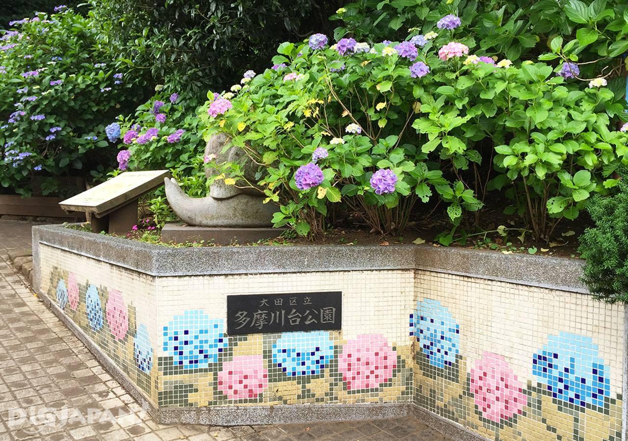 多摩川台公园紫阳花2