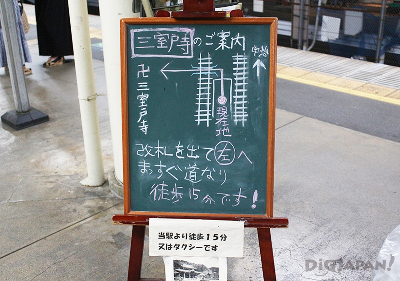 三室戸寺夜賞繡球花-8