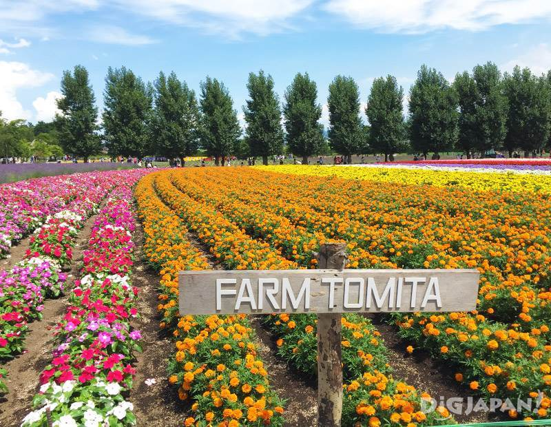 furano flower8