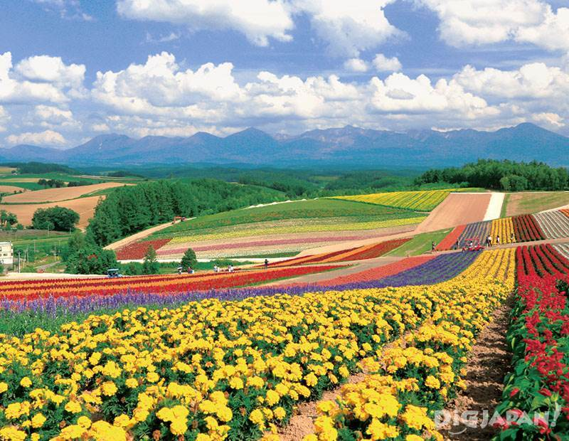 furano flower2