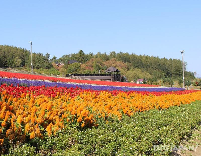 furano flower10