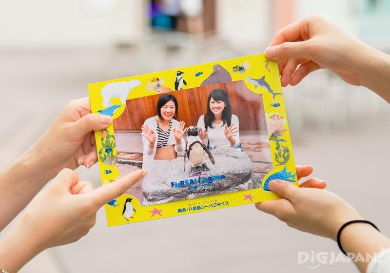 橫濱八景島海島樂園與企鵝拍照照片
