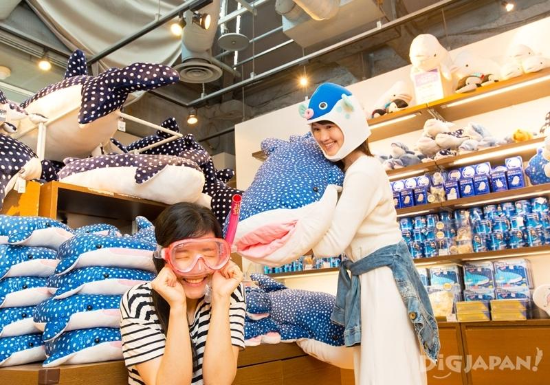 橫濱八景島海島樂園商店內玩偶鯨鯊