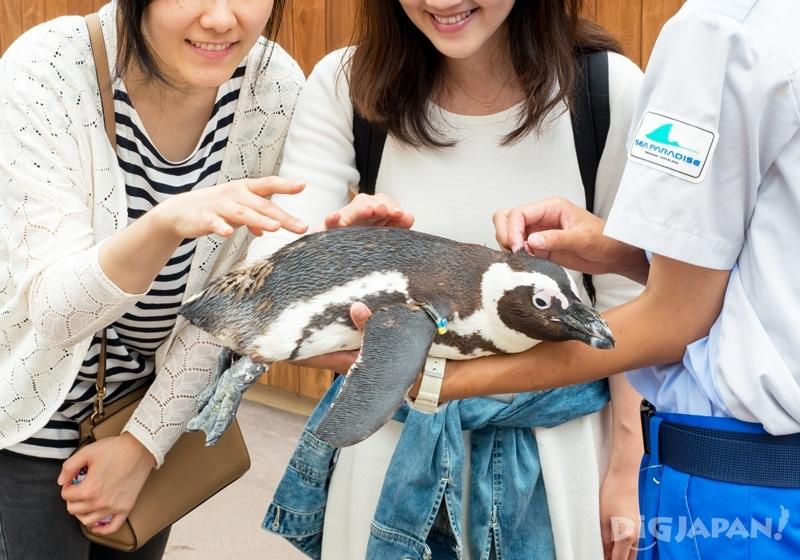 橫濱八景島海島樂園-企鵝