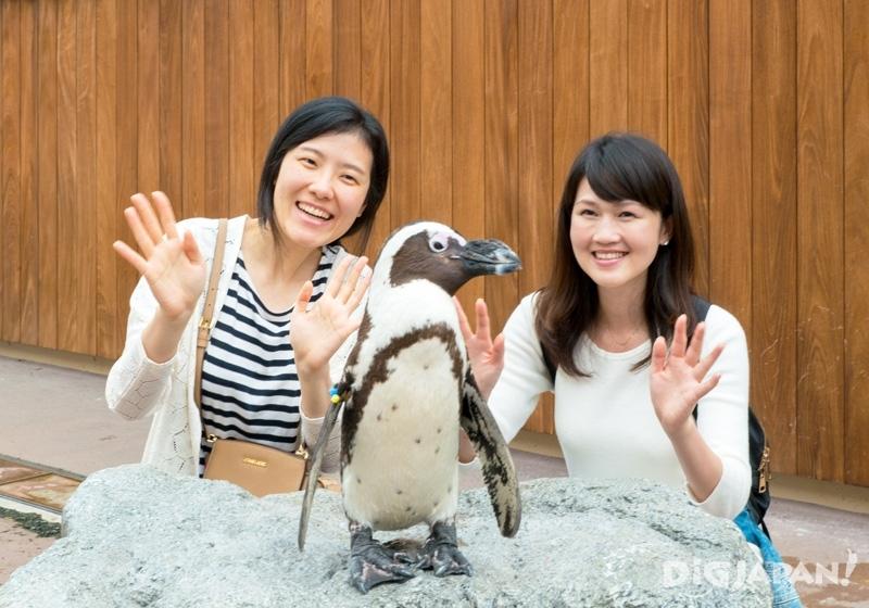 橫濱八景島海島樂園與企鵝拍照