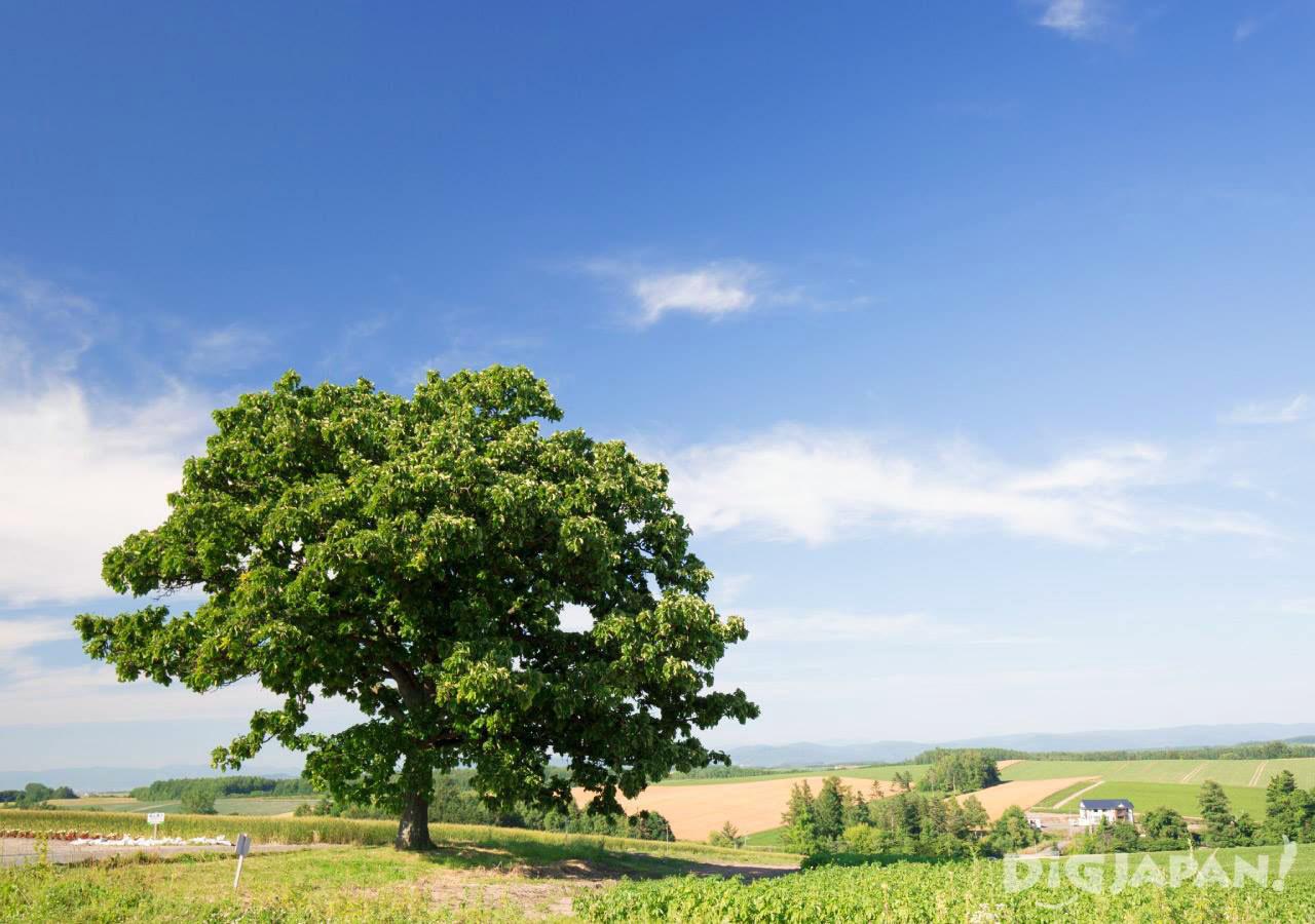 ทริปบิเอ_ต้นไม้เซเว่นสตาร์