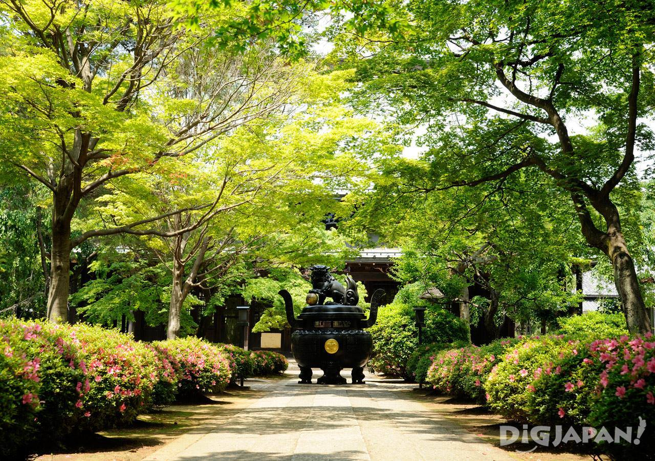 緑が美しい豪徳寺