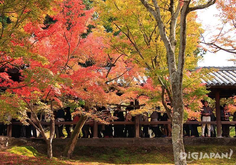 วัดโทฟุคุจิ_วิวสะพานกาอุนเคียวจากสวน