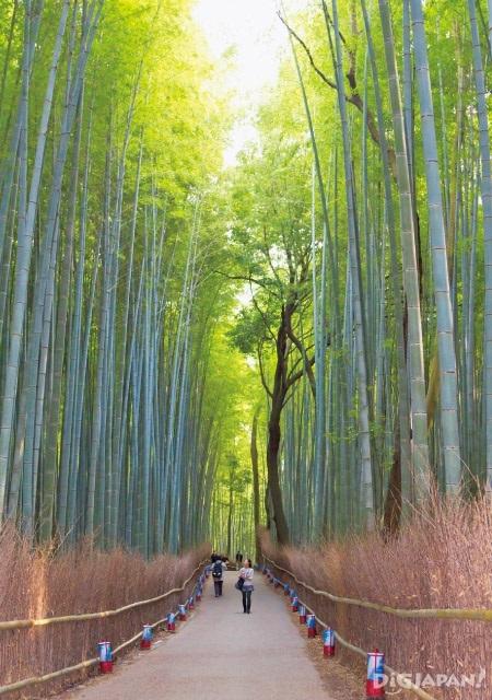 아라시야마 추천 관광 대나무숲