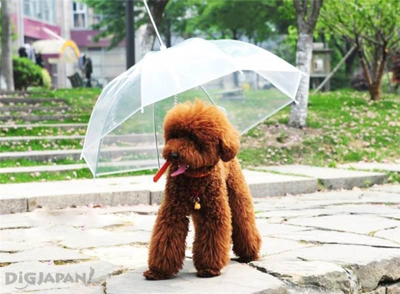 小狗散步伞1