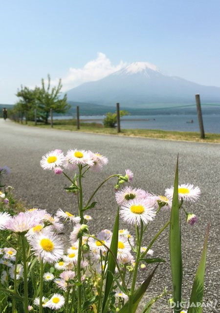 """1 วันกับ """"ฟูจิวิว""""_วิวดอกไม้ริมทาง"""