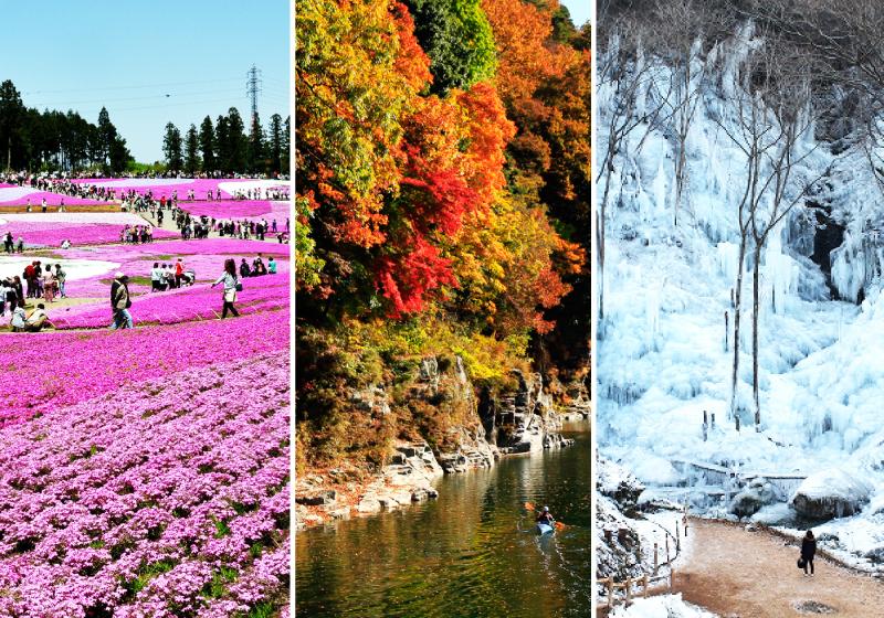 秩父的四季芝櫻楓葉冰柱