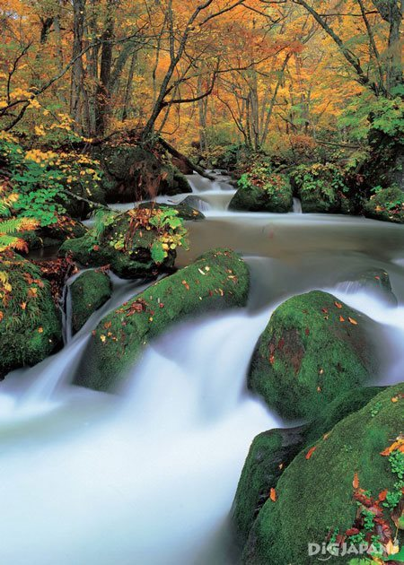 Fall foliage at Oirase Stream in Aomori Prefecture 2