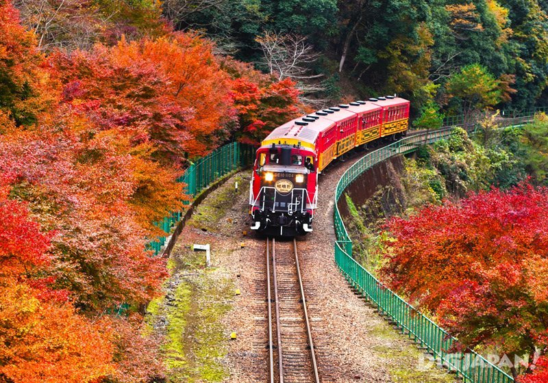 Enjoy the fall colors in Kyoto's Sagano Arashiyama area on the Sagano Romantic Train