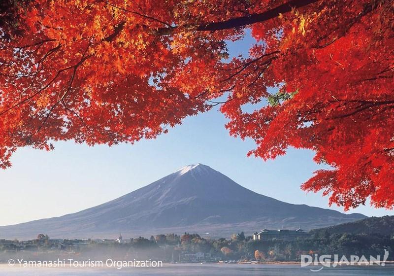 富士河口湖紅葉まつりの紅葉トンネル