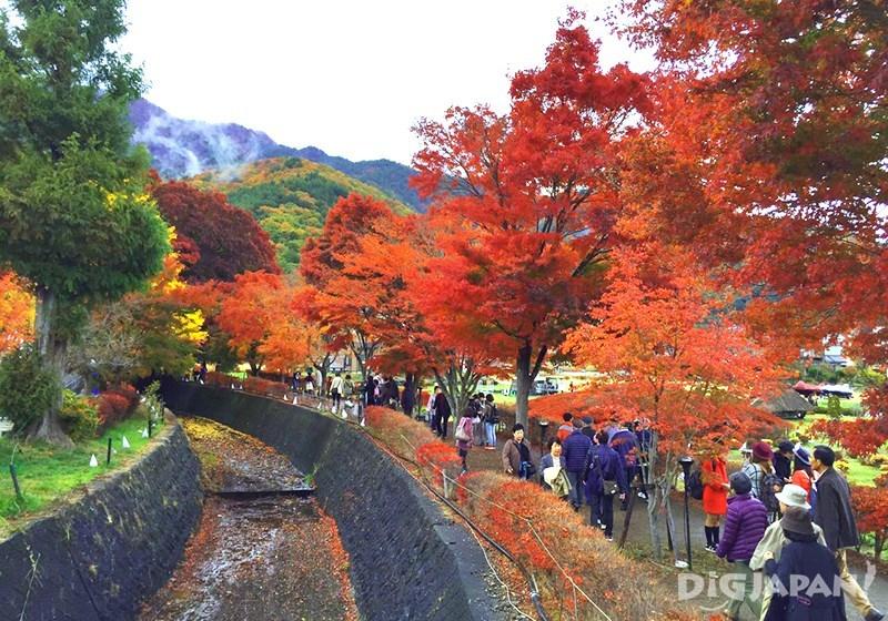 Momiji Corridor at Kawaguchiko 2