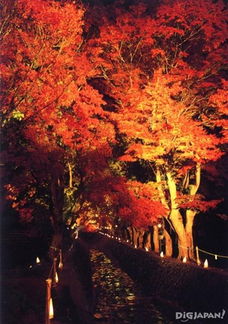 富士河口湖紅葉まつりのもみじ回廊ライトアップ_3