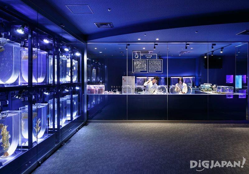 墨田水族館水母分階段成長過程都可在這裡觀察到