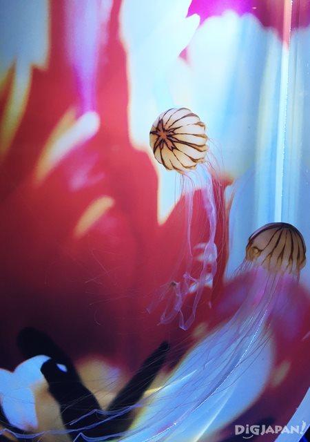 まるで花びらのような色合いのクラゲ
