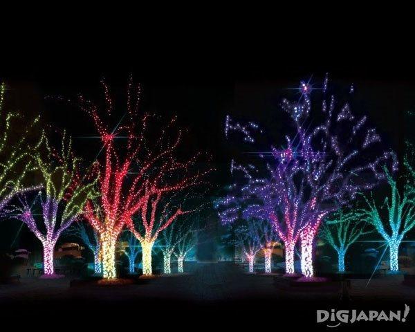 Kobe Illuminage 2