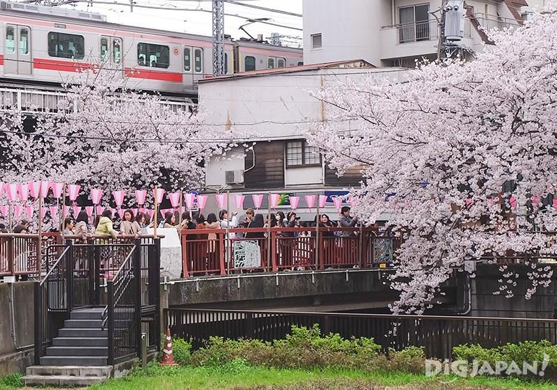 Nakameguro sakura4