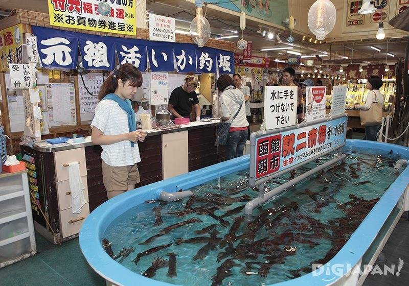 Catch your own squid and have it made into sashimi