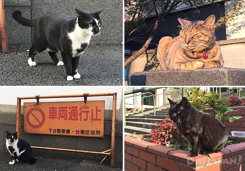 老街谷中的猫咪们
