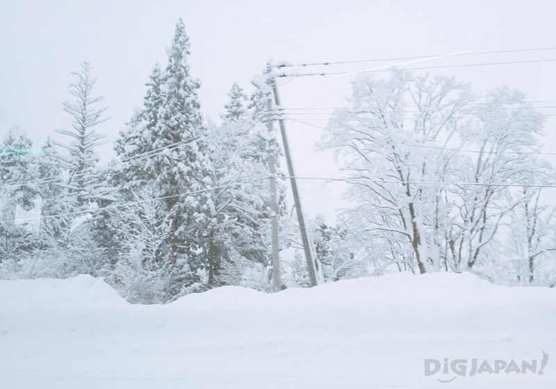 針葉松林雪景