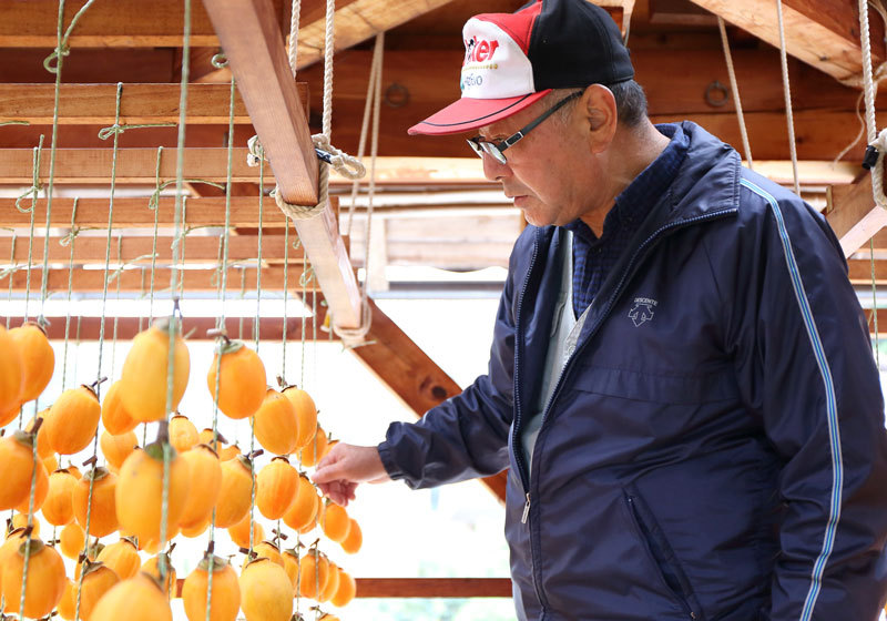 Checking the persimmons