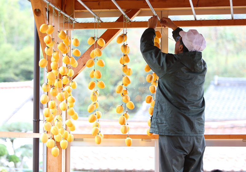 Hanging persimmons to dry