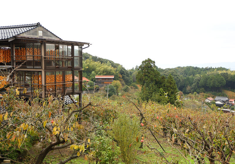 Orchards and huts