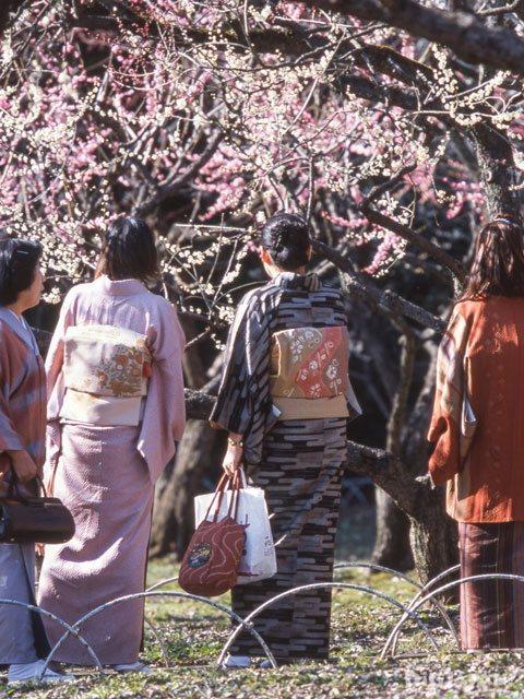Plum Blossms at Kitano Tenmangu Shrine 3
