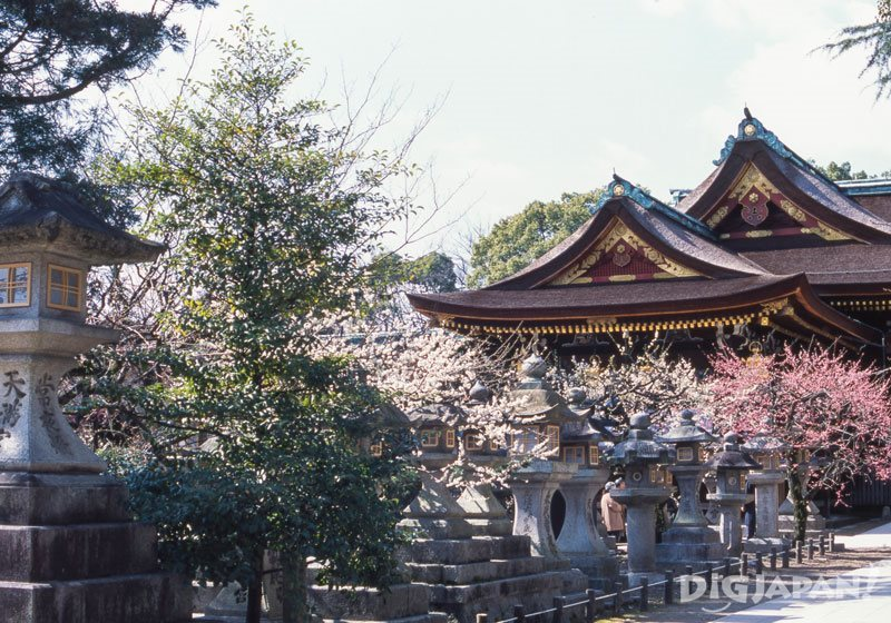 Plum blossom Kitano Tenmangu Shrine